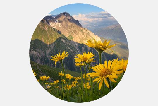 Vignette Alpine regions